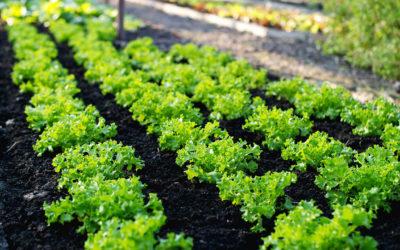 Il luogo ideale per il nostro orto