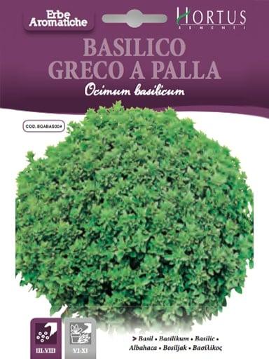 Basilico greco