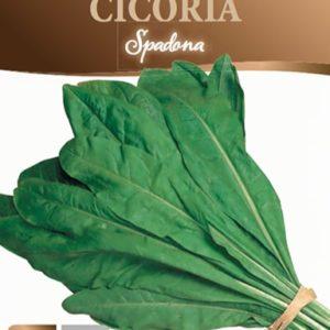 Cicoria Spadona