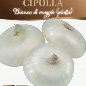 Cipolla bianca di Maggio piatta