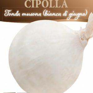 Cipolla musona