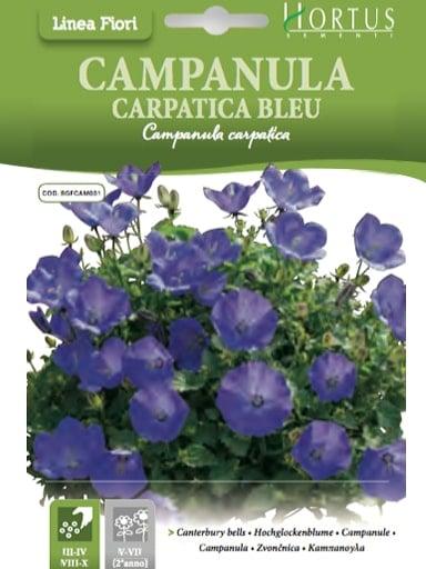 Campanula carpatica