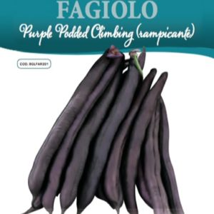 Fagiolo Purple Podded