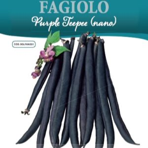Fagiolo Purple Teepee