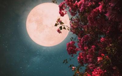 Luce lunare: quali sono i benefici sulla vegetazione?