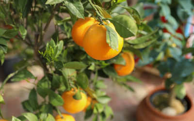 Luna e piante mediterranee: cosa fare e quando?