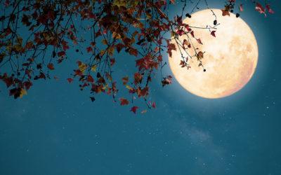 Le tredici lunazioni