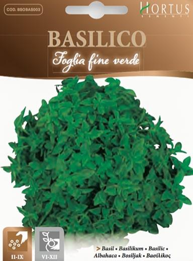 Basilico foglie fine verde