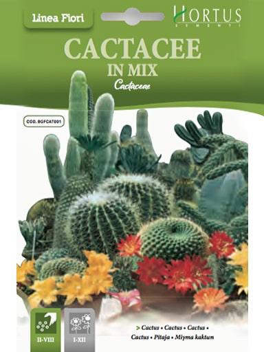 Semi Cactus