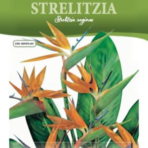 Semi di Strelitzia