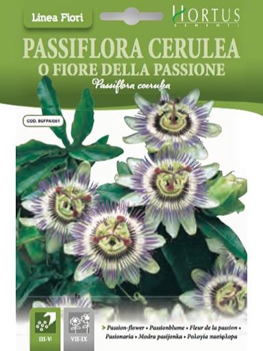 Passiflora Cerulea o Fiore della Passione