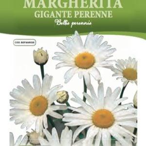 Margherita Gigante