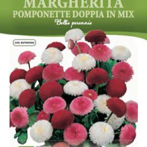 Margherita Pomponette