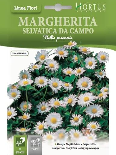 Margherita selvatica