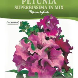Petunia Superbissima