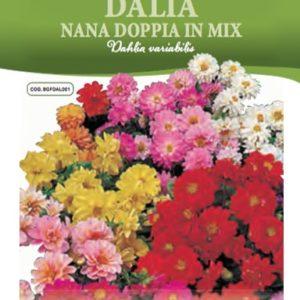 Dalia Nana