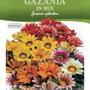 Gazania semi