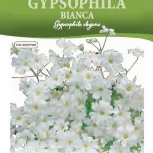 Gypsophila bianca