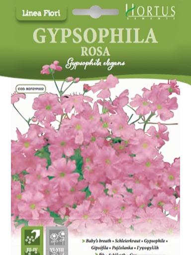 Gypsophila rosa