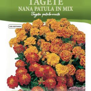 Tagete Patula Nana