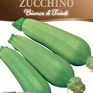 Zucchina bianca di Trieste