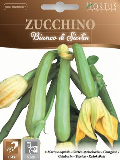 Zucchino bianco di Sicilia