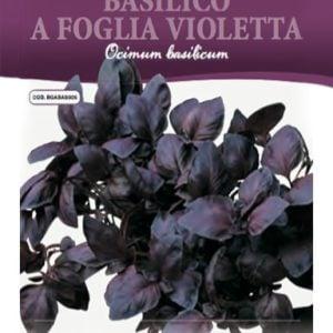 Basilico viola