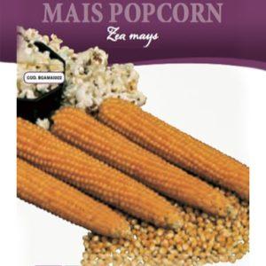 Mais per popcorn