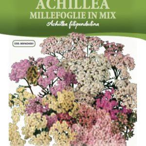 Achillea Millefoglie