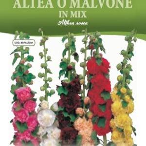 Semi di Malvone